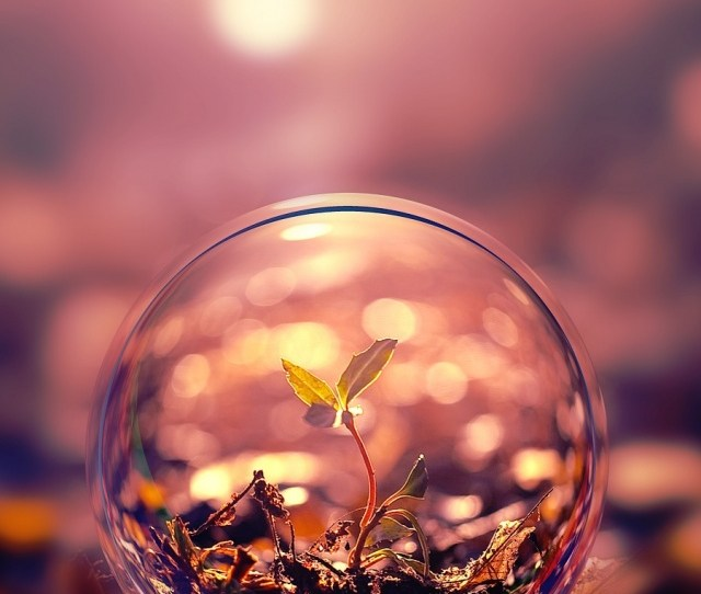 Beautiful Macro Photography Plant Water Bubble Iphone  Wallpaper