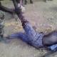 video of soldier breaking a man's leg