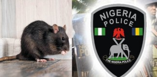 Rats ate dead baby's ear at Anambra hospital