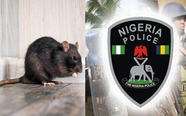 Rats ate dead baby's ear at Anambra hospital – Police