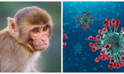Coronavirus vaccine works on monkeys