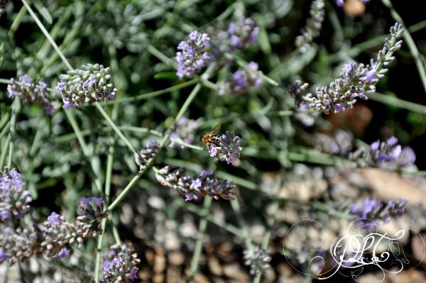 Prendre le temps - Nouvelle maison - lavande et abeille