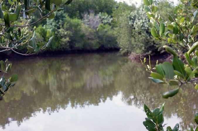 Des petits coins perdus dans la mangrove