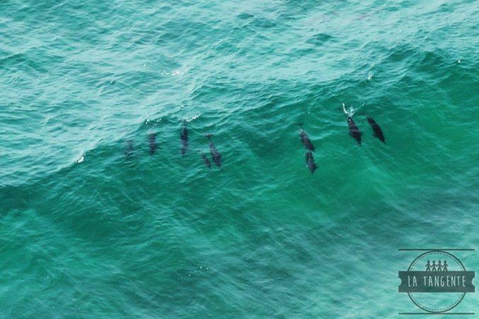 Dolphins powaaa (meilleurs que moi en surf)