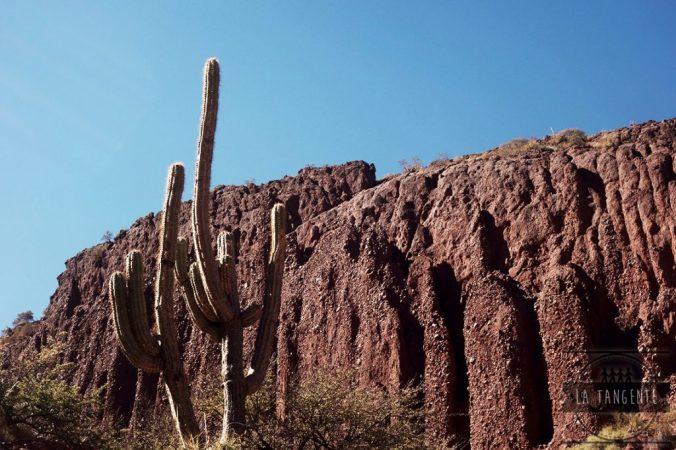 La prairie bordée de cactus