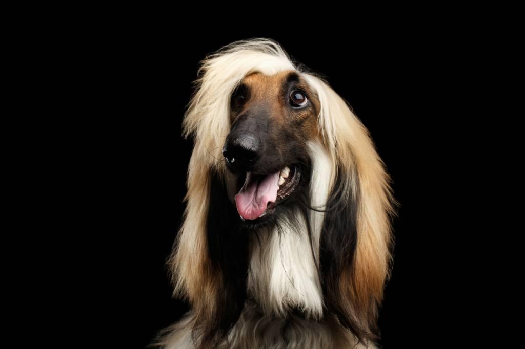 Poils longs du chien : comment éviter les nœuds ?