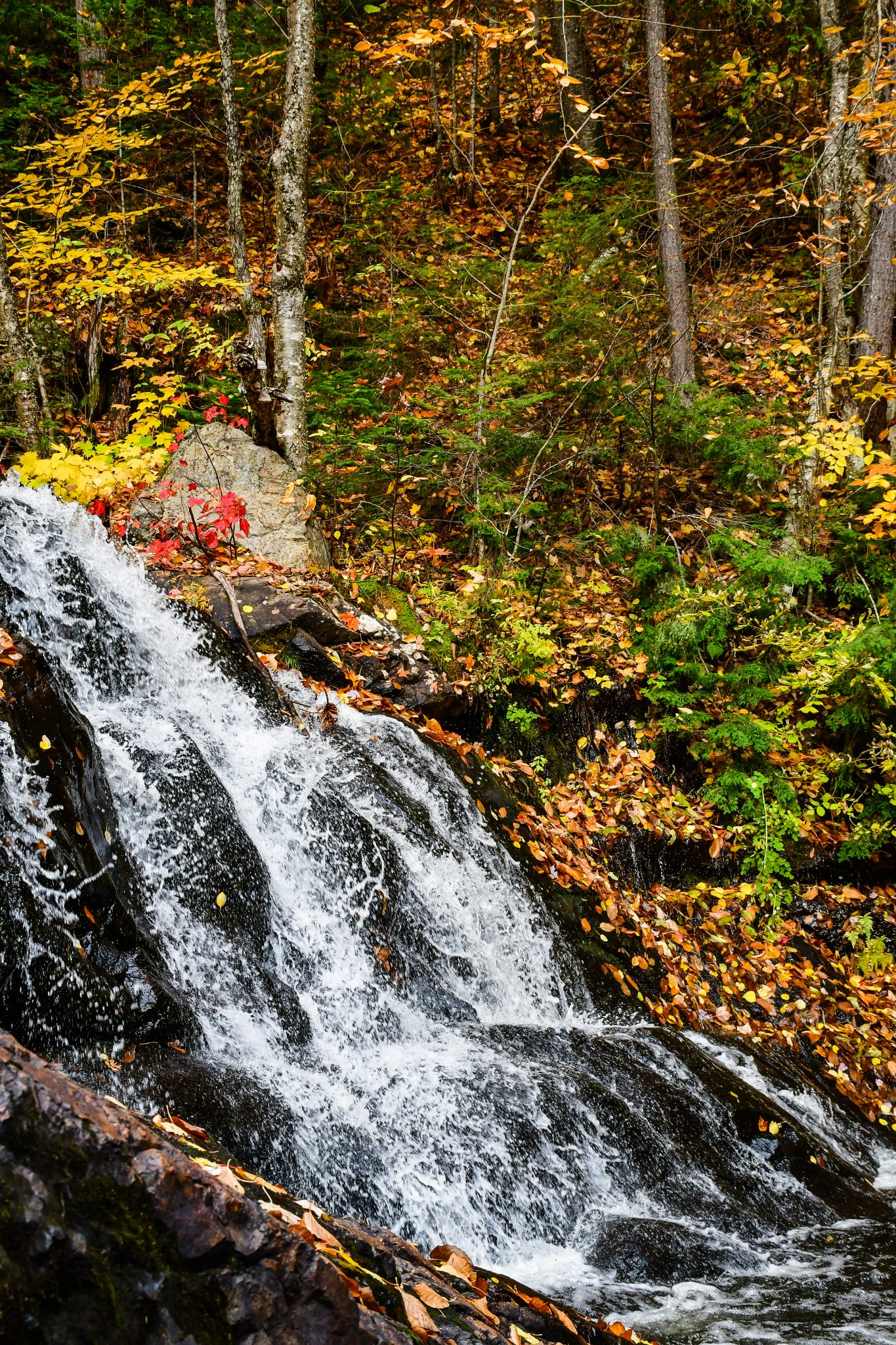 cascade foret automne