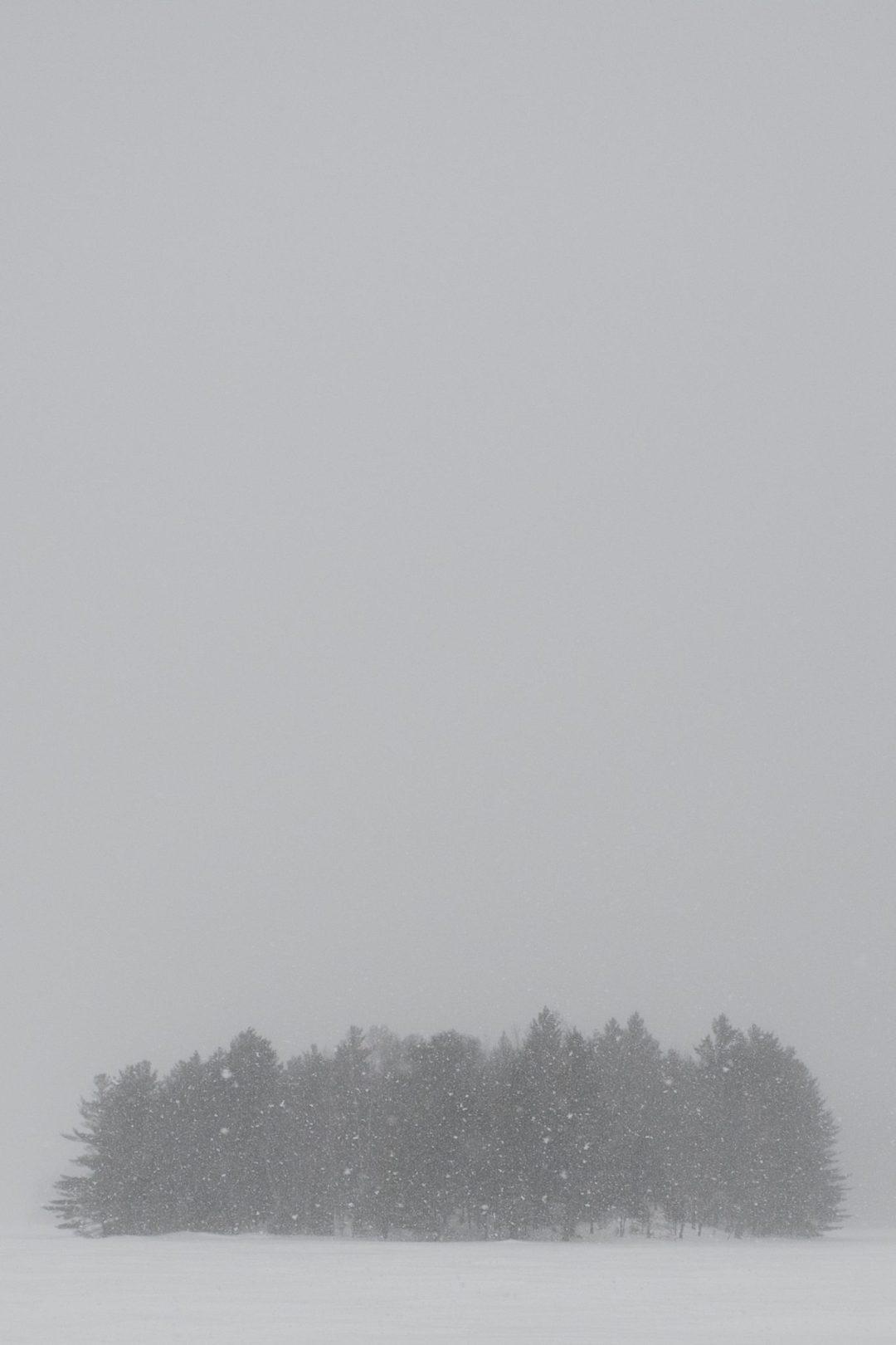 brouillard arbre lac