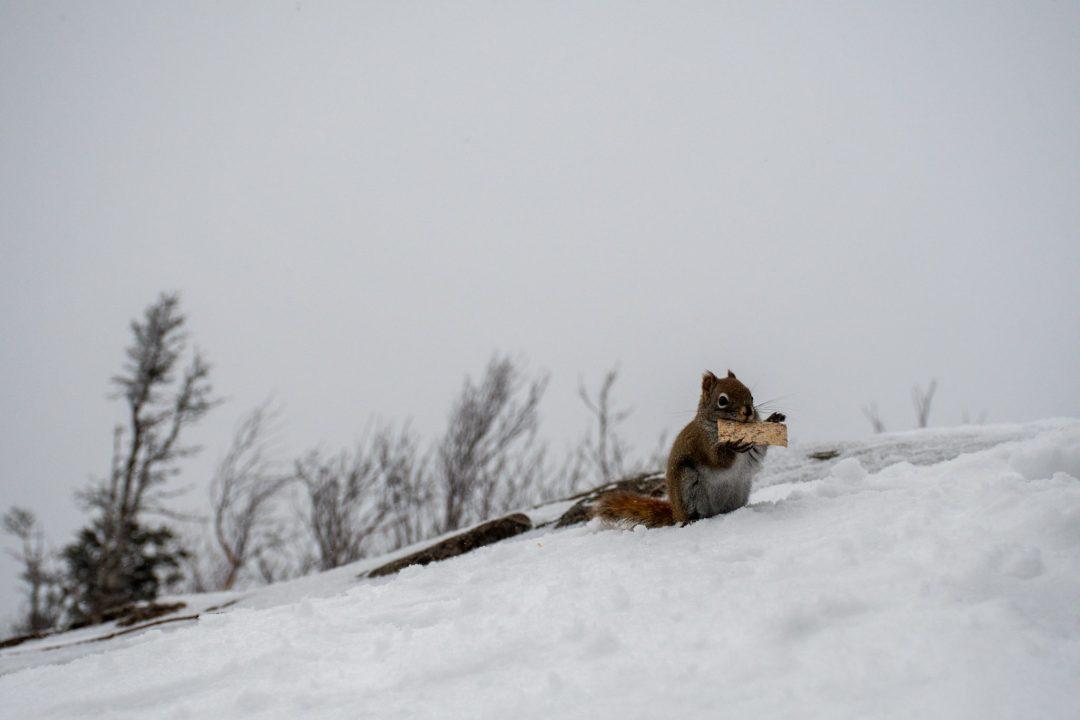 ecureuil neige