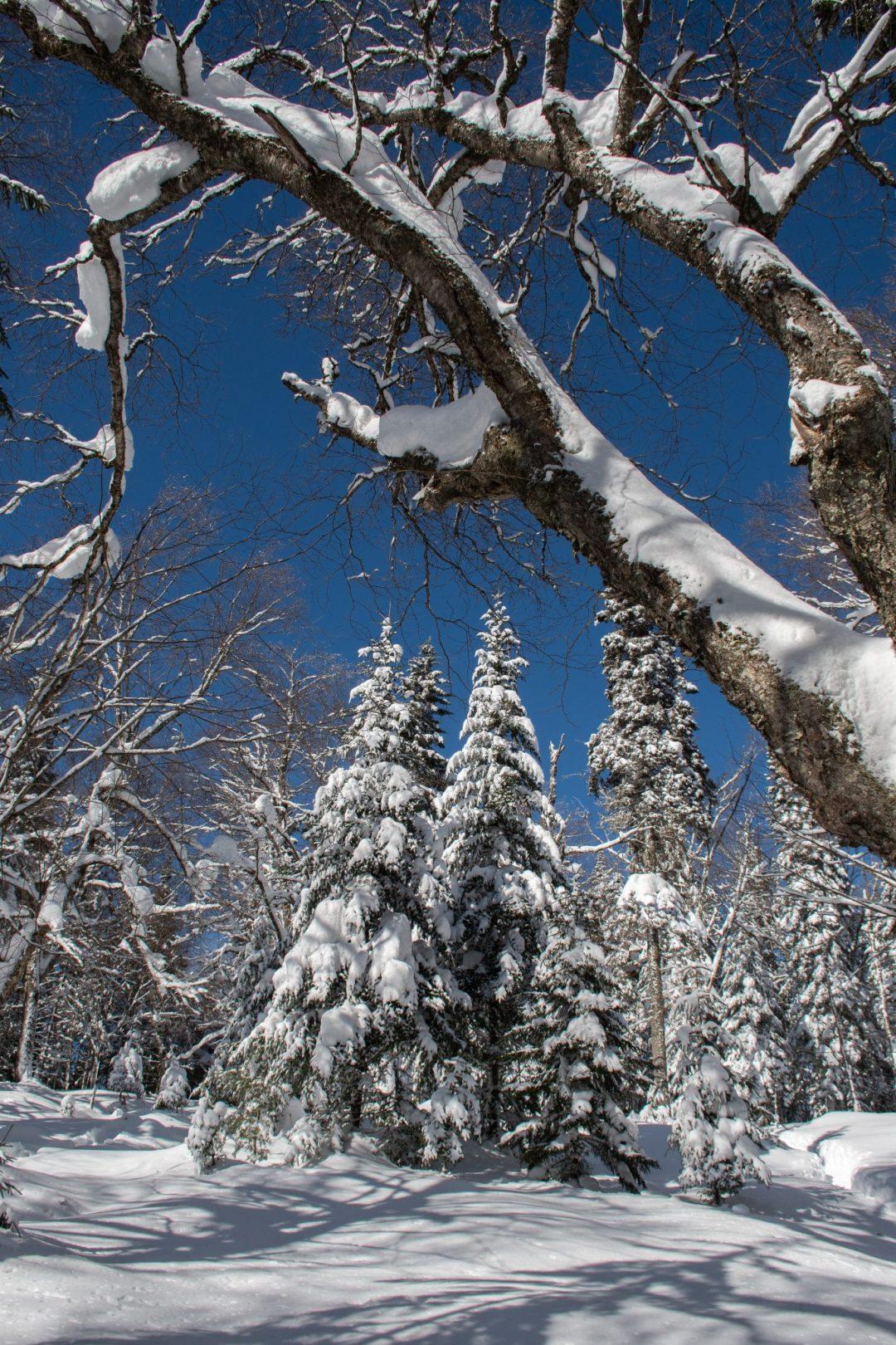 sentier neige cartier