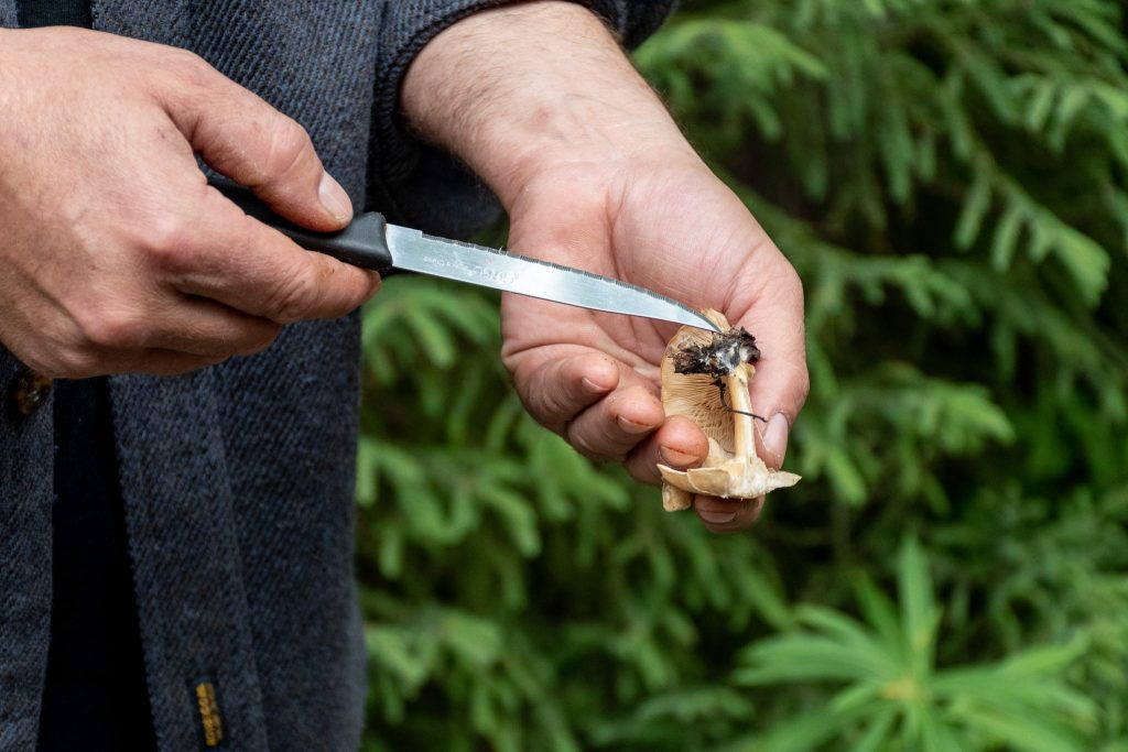 champignon sauvage