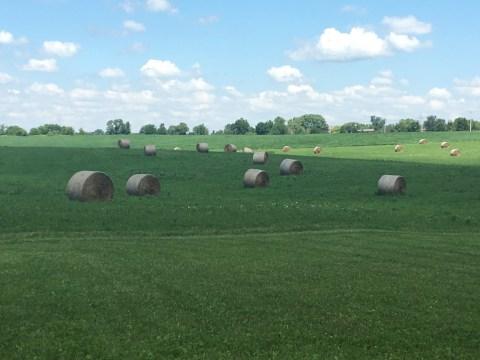 hayfields