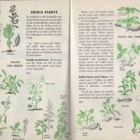 Edible Plants Boy Scouts of America 1969