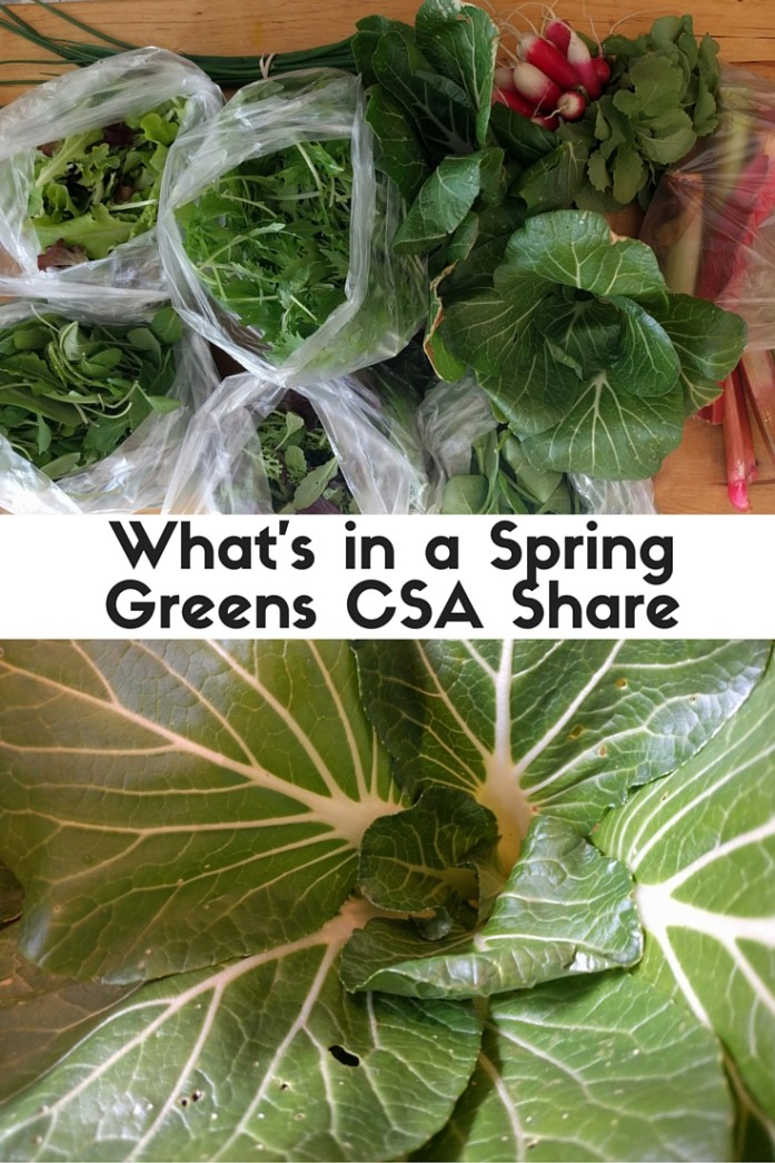 What's in a spring greens CSA share - what to expect in an early season CSA basket