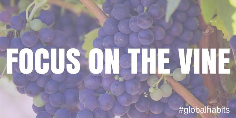Focus on the Vine