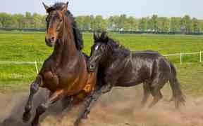 wild horses slaughter
