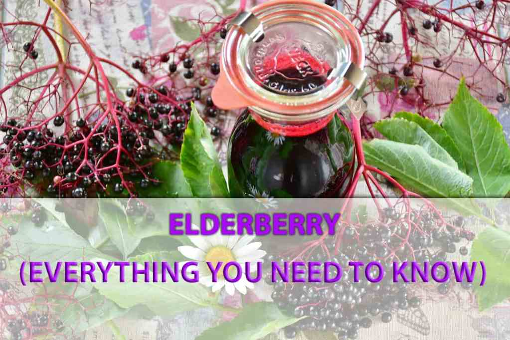 elderberry facts and information