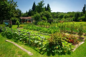 Superfood Garden Summit – FREE online, July 17-21, Sign up link.
