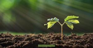 Here's the Dirt on Healthy Garden Soil