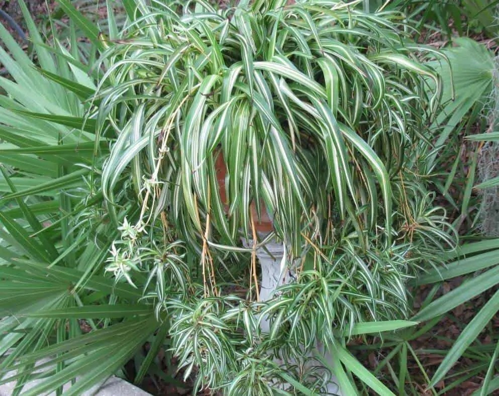 10 Amazing Air Purifying Survival Plants Prepper 39 S Will