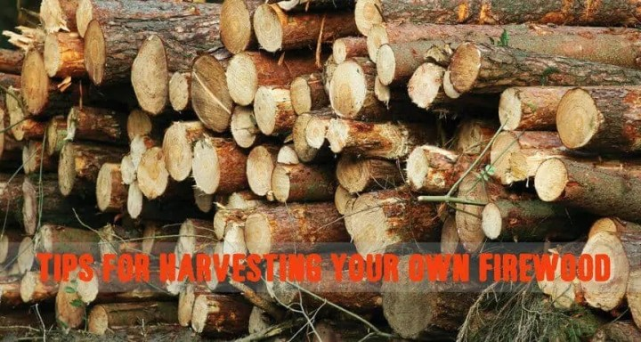 Prepper's Will - Harvesting firewood