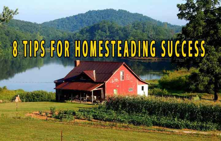 Prepper's Will - 8 Tips for Homesteading Success