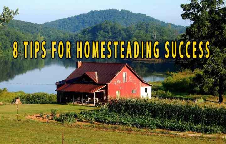 Prepper's Will - 8 Tips for Homesteading Success