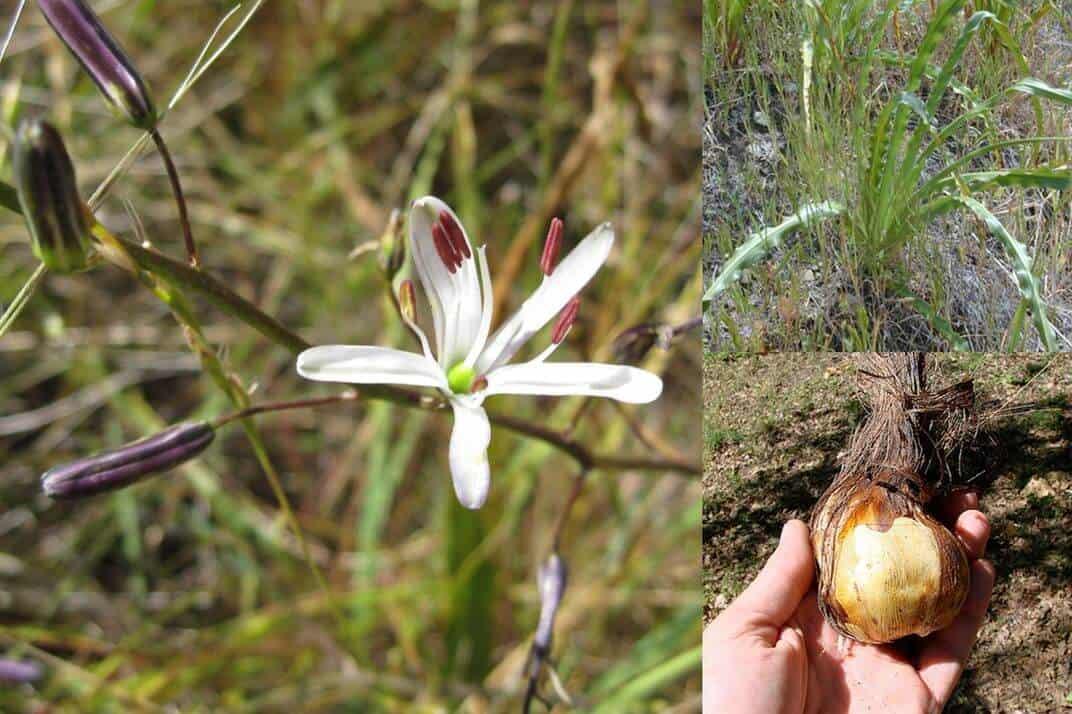 Blogging Naturalist: Morgan Dill | Santa Cruz