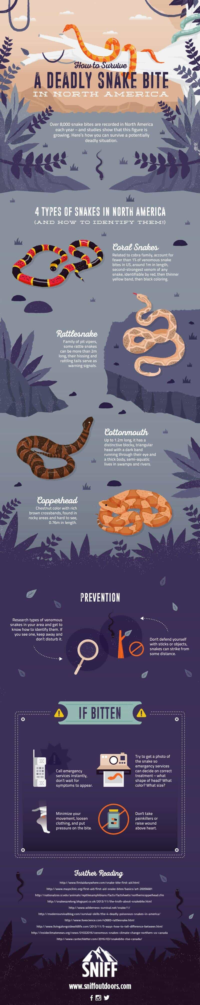 Deadly Snake Guide - Infographic