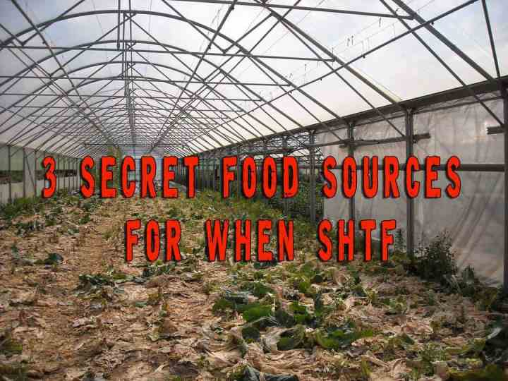 3 Secret food sources for when SHTF
