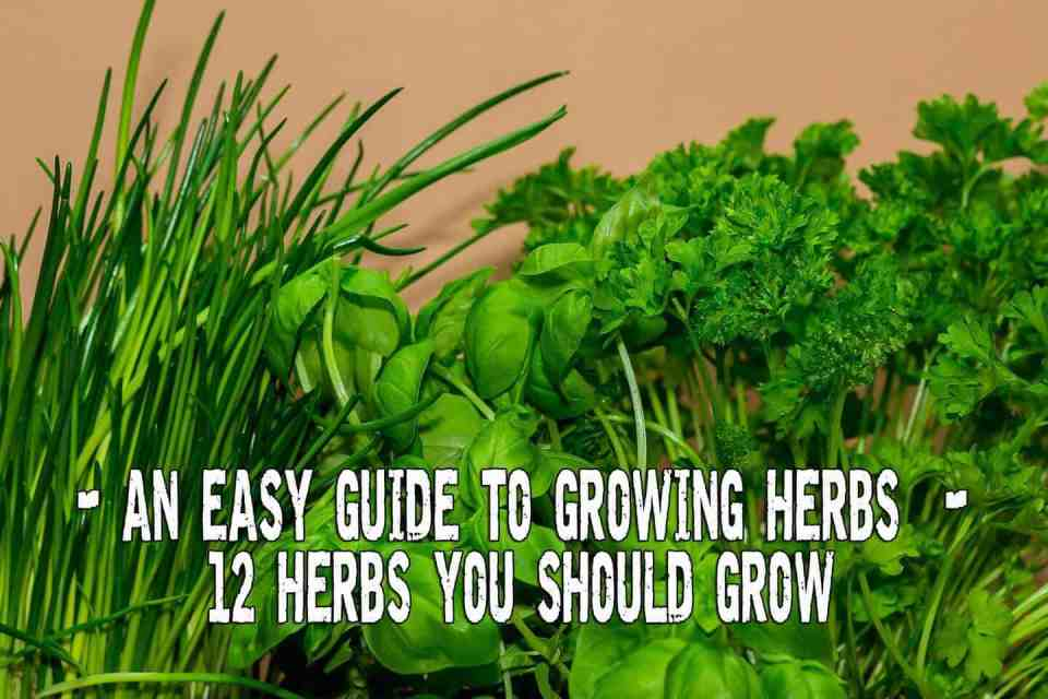 An easy guide to growing herbs
