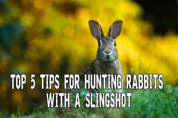 Rabbit Hunting with Slingshot for Survival