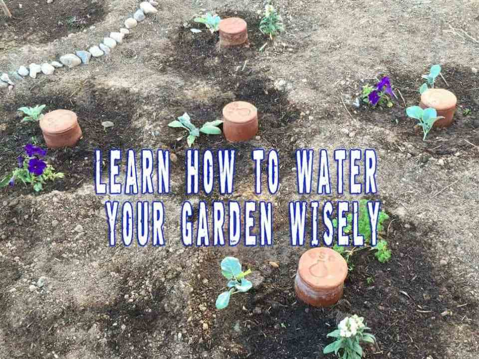 Learn How To Water Your Garden Wisely