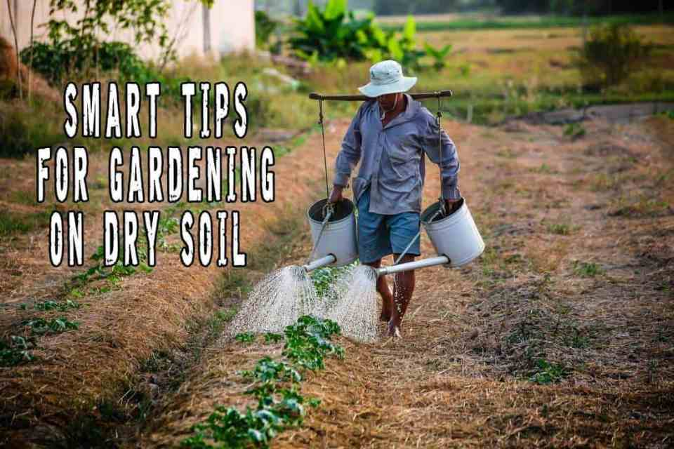 Smart Tips For Gardening On Dry Soil