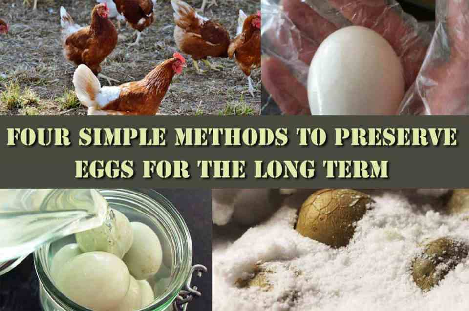 Four Simple Methods To Preserve Eggs For The Long Term