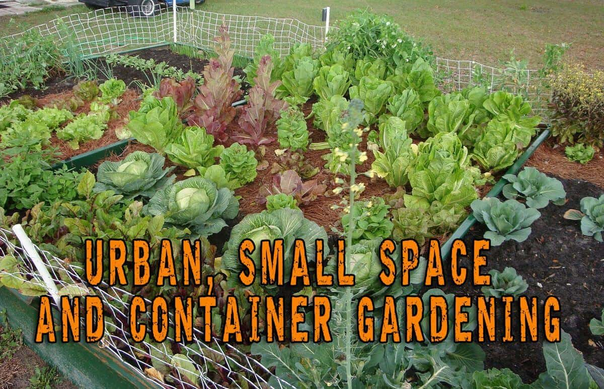 Urban, Small Space And Container Gardening