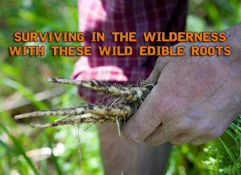 Surviving In The Wilderness With These Wild Edible Roots