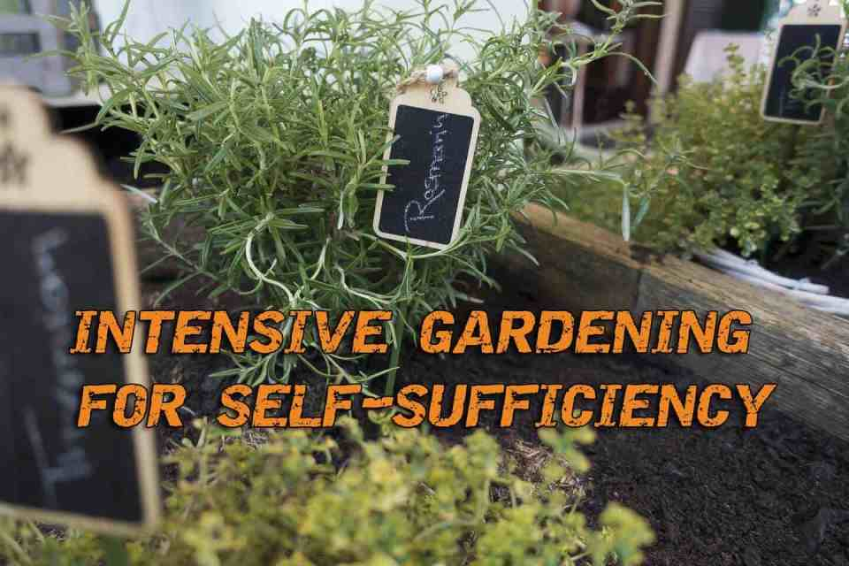Intensive Gardening For Self-sufficiency