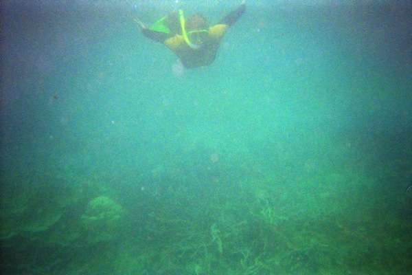 Snorkeling Whitsundays
