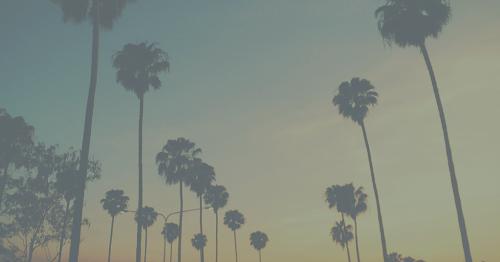 palm tre