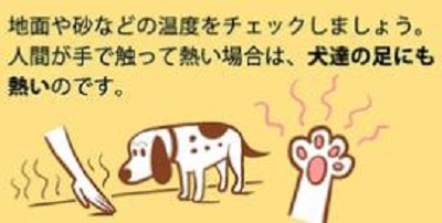 愛犬のために必ず守ってほしいこと