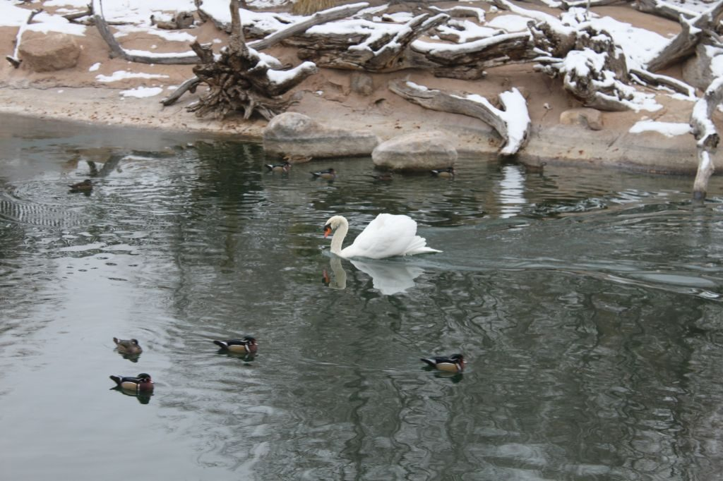 Observing Nature in Winter by Preschool Inspirations