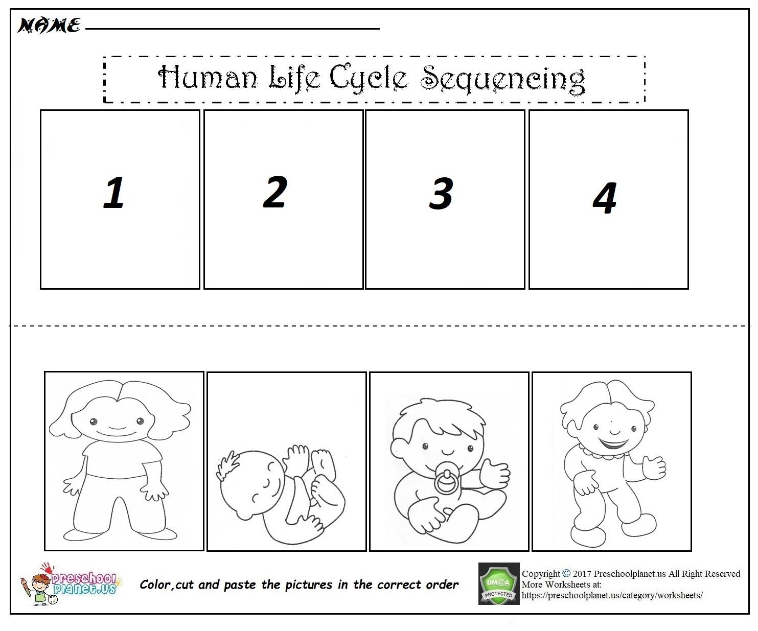 Human Life Cycle Sequencing Worksheet