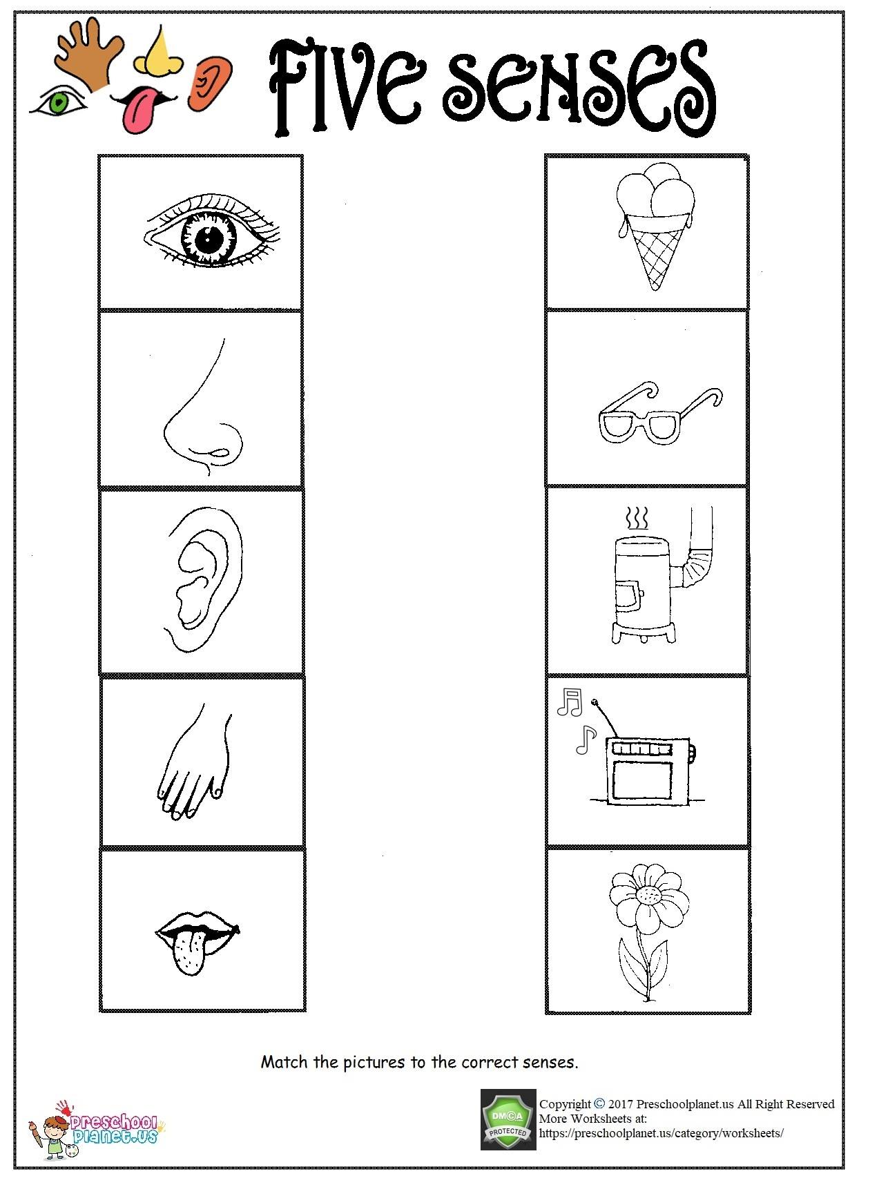 My Five Senses Worksheet Pictures To Pin