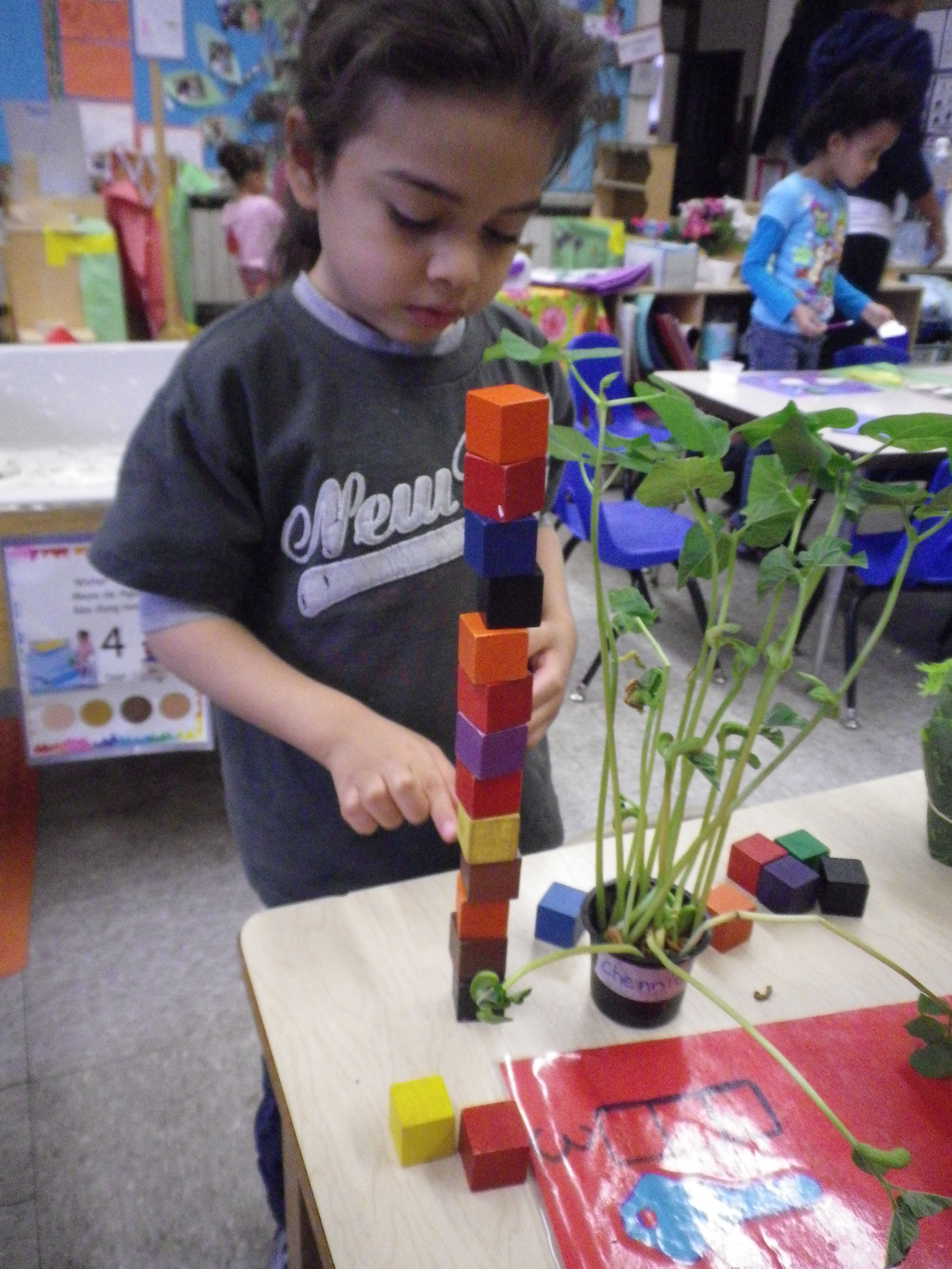 Growing And Measuring Plants