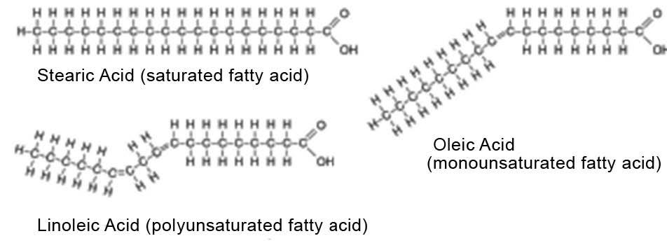 Spring2016-masterjohn-fats