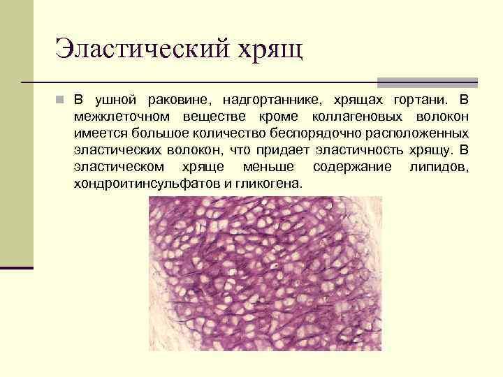 Pregătirea elastică a țesutului cartilaj -