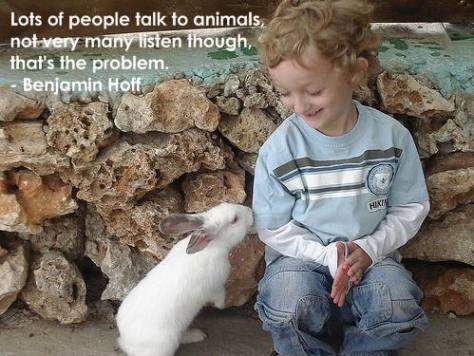 Awww, cute widdle wabbit.