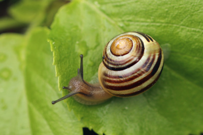 snail-slime-skincare