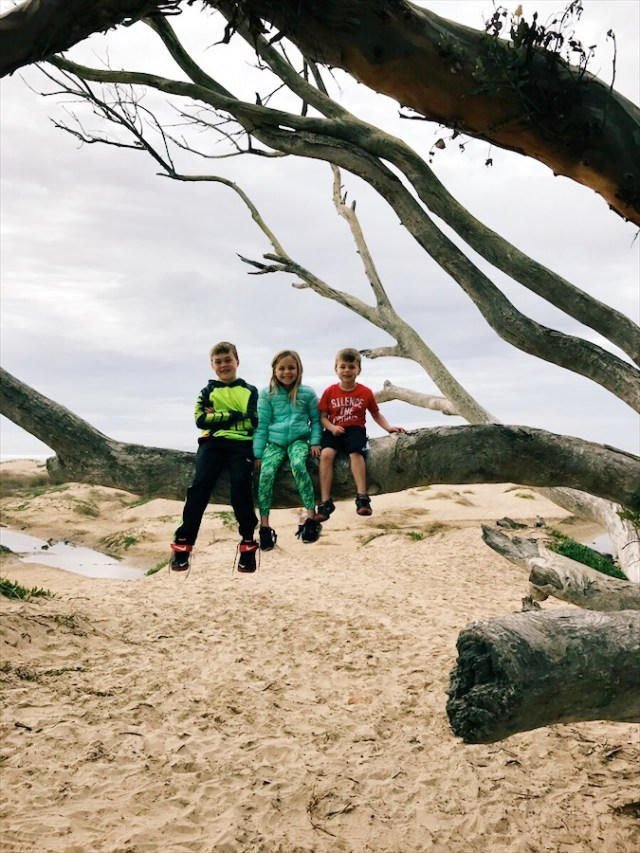 kids-pismo-tree